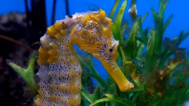 Bидео Seahorse head close up