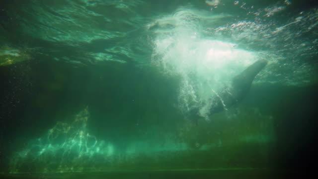 Seal lion three jumps video