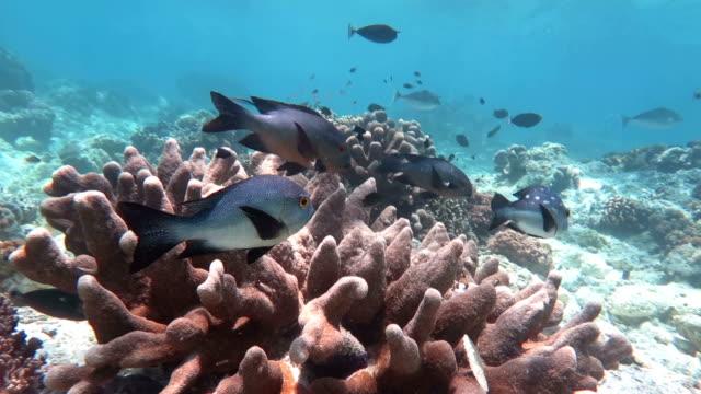 Sealife in Sipadan, Malaysia video