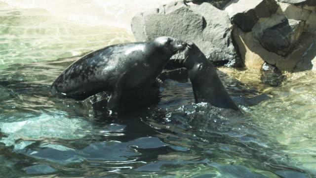 HD: Seals kissing and jumping video