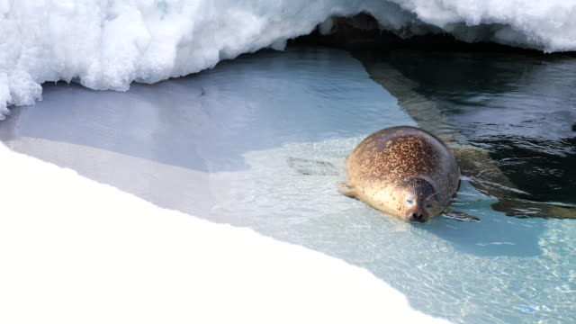 vídeos y material grabado en eventos de stock de sellos de colocar en el agua - viaje a antártida