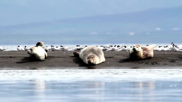 Seals on the shore video