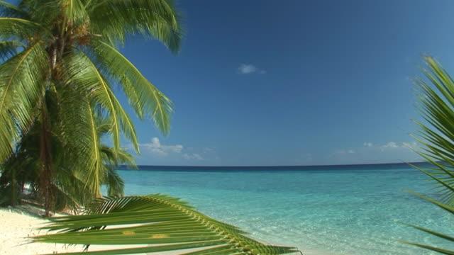 seamless loop palmtrees on a beach - döngüsel ögeler stok videoları ve detay görüntü çekimi
