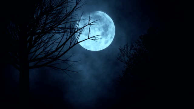 Seamless loop time lapse of moon night sky. spooky trees silhouette. darkness. scary sky. clouds moving Seamless loop time lapse of moon night sky. spooky trees silhouette. darkness. scary sky. clouds moving moon stock videos & royalty-free footage