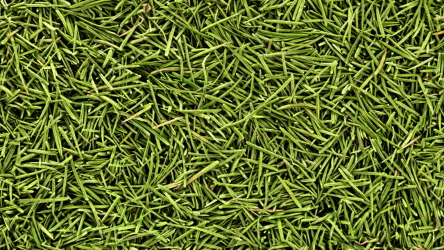 Seamless loopable background from fir needles