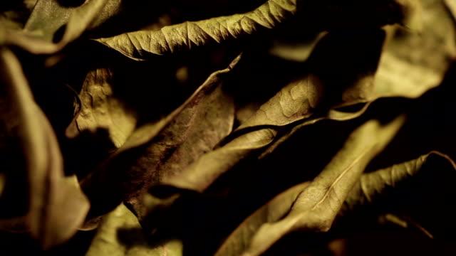 sear mandarin leafs - abbrustolito video stock e b–roll