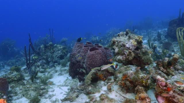 vídeos y material grabado en eventos de stock de paisaje marino de arrecife de coral en mar del caribe en curazao en el sitio de buceo santa cruz con la esponja grande - tubo