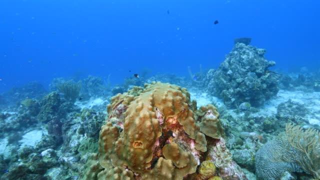 Seascape Korallenriff in Karibik auf Curacao am Tauchplatz STA Cruz mit verschiedenen Korallen und Schwamm – Video