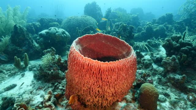 Seascape Korallenriff in der Karibik auf Curacao am Tauchplatz Paradise – Video