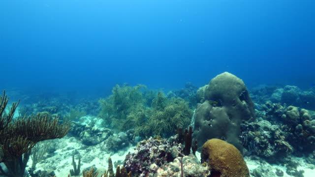 カリブ海ダイビング サイト watamula にキュラソー島周辺のサンゴ礁の海の絵 - 広角撮影点の映像素材/bロール