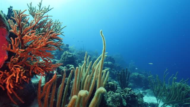 カリブ海ダイビング サイト マコの山のキュラソー島周辺のサンゴ礁の海の絵 - 広角撮影点の映像素材/bロール