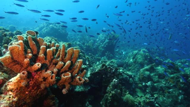 Seascape Korallenriff in der Karibik auf Curacao am Tauchplatz Groote mit verschiedenen Korallen und Schwämme – Video