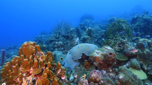 Seascape Korallenriff in der Karibik auf Curacao am Tauchplatz Playa Lagun mit verschiedenen Korallen und Schwämme – Video