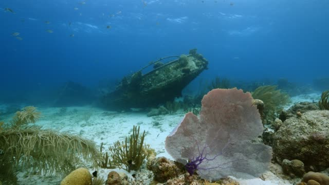 seascape of coral reef in the caribbean sea around curacao at dive site tugboat saba with ship wreck, various corals and sponges - кораблекрушение стоковые видео и кадры b-roll