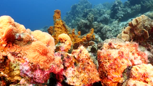 vídeos de stock e filmes b-roll de seascape of coral reef in the caribbean sea around curacao at dive site rediho with various corals and sponges - esponja