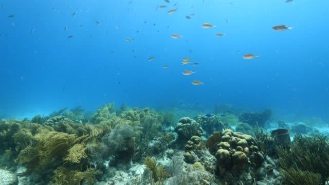 カリブ海ダイビング サイト スクーター様々 なサンゴとスポンジでキュラソー周辺のサンゴ礁の海の絵 - 広角撮影点の映像素材/bロール