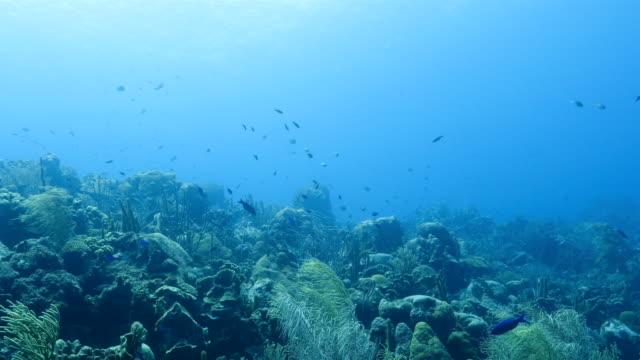 Seascape Korallenriff in der Karibik auf Curacao am Tauchplatz Watamula – Video