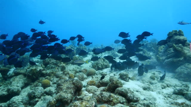 Seascape of coral reef in the Caribbean Sea around Curacao at dive site Rif St. Marie video