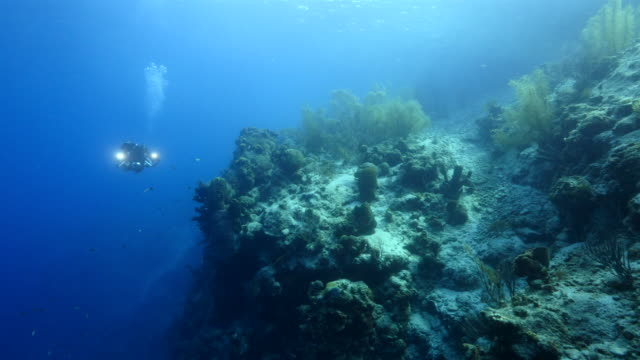 Seascape of coral reef in the Caribbean Sea around Curacao at dive site Director's Bay video