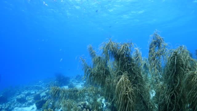 Seascape Korallenriff in der Karibik auf Curacao / Niederländische Antillen – Video