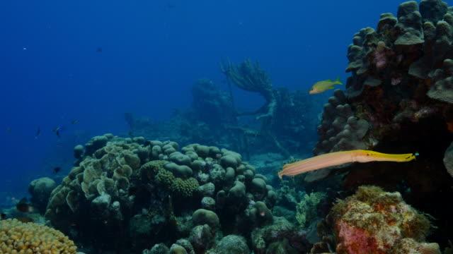 Seascape Korallenriff in der Karibik auf Curacao – Video