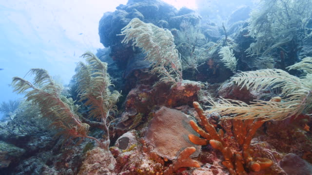 Seascape of coral reef in the Caribbean Sea around Curacao with fish, coral and sponges video