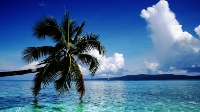 푸른 바다, 여름 배경에 코코넛 야자수 햇빛과 바다 풍경., 잠금. - 동작 정지 스톡 비디오 및 b-롤 화면