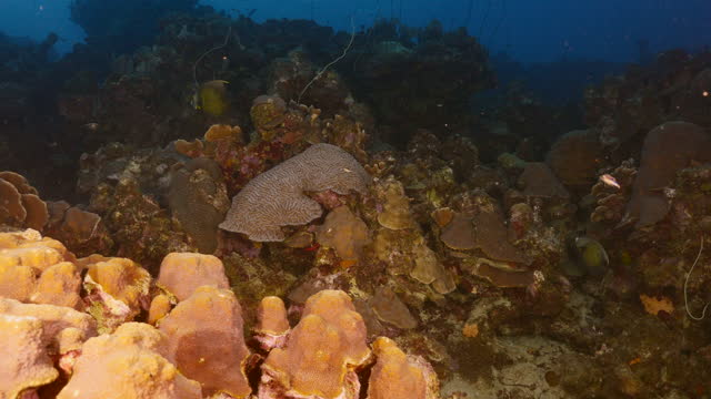 Seascape with various fish, coral and sponge in coral reef of Caribbean Sea, Curacao video