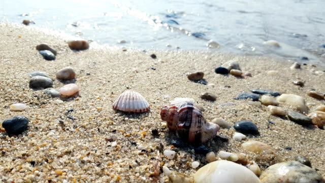 Seashell on sea shore Seashell on sea shore animal shell stock videos & royalty-free footage