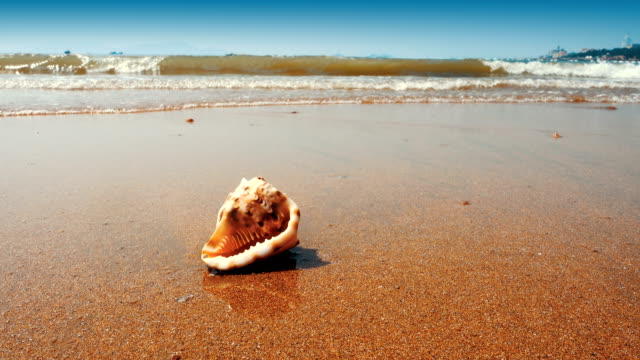 Seashell on the sand beach Seashell on the sand beach summer background stock videos & royalty-free footage