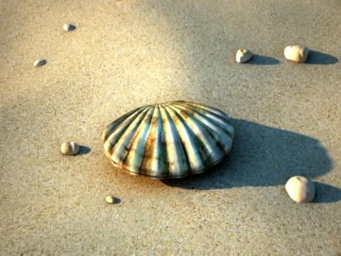 vidéos et rushes de seashell - coquille et coquillage