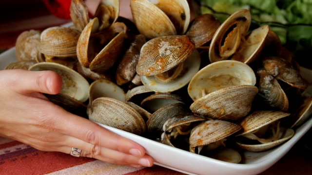 seashells dinner video