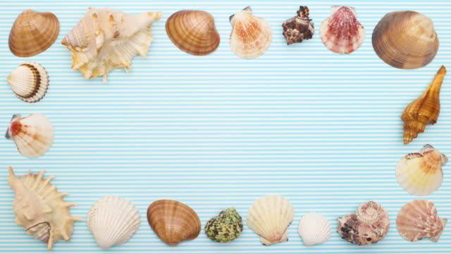 Seashells frame appear on blue background - Stop motion