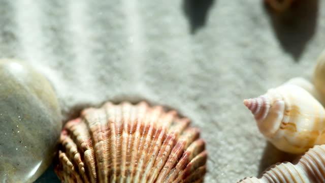 vídeos de stock e filmes b-roll de seashells from vacation - bugio