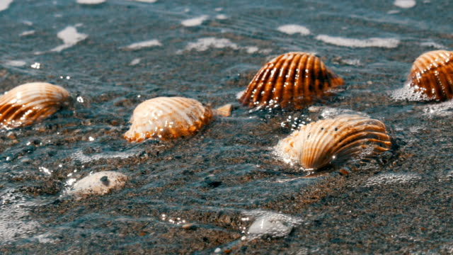Seashells in the sand beach, waves splash on the shells.Beautiful seashells on a tropical beach.Travel concept video