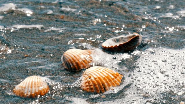 Seashells in the sand beach, waves splash on the shells.Beautiful seashells on a tropical beach.Travel concept video