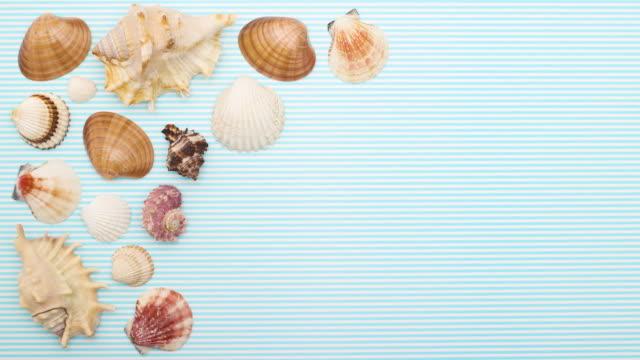vídeos de stock e filmes b-roll de seashells moving on by one on left side  - stop motion - bugio