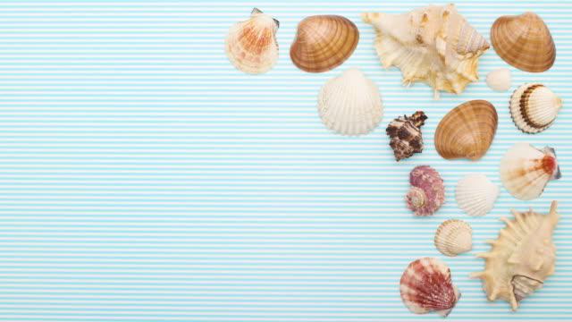 vídeos de stock e filmes b-roll de seashells moving on right side - stop motion - bugio