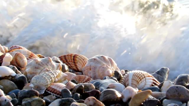 vídeos de stock e filmes b-roll de seashells onto pebbles - bugio