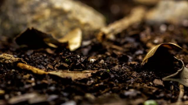 Season Change Snow to Springtime Plants Growing Timelapse