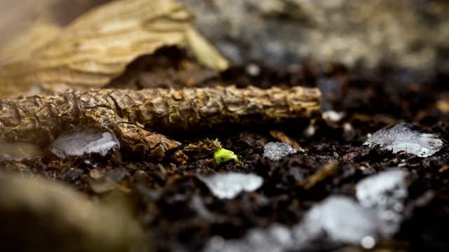 新しい命の成長の種を季節変更時間経過雪 - 雪点の映像素材/bロール