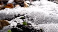 istock Season Change Time Lapse With Seeds Growing New Life 1048377018