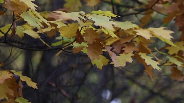 vídeos de stock, filmes e b-roll de temporada de belas folhas de outono - pink october