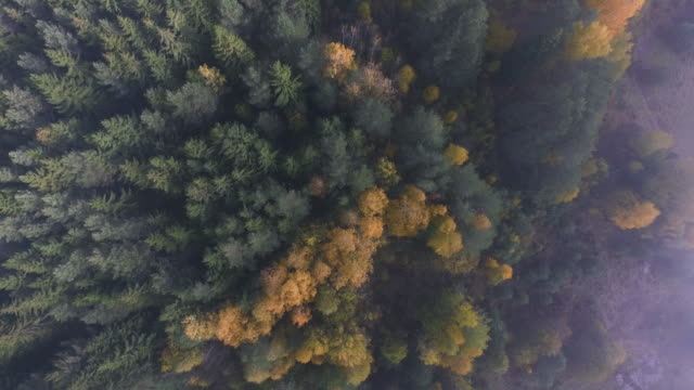 seasonal forest aerial view in fall and early morning sunlight and low clouds. - capanna video stock e b–roll