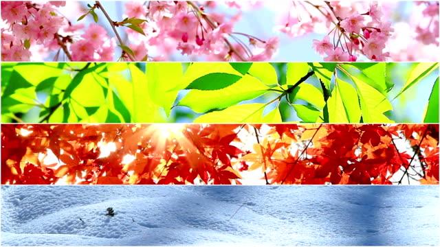 4 pory roku kolaż przyrody. kilka materiałów o innej porze roku. - four seasons filmów i materiałów b-roll
