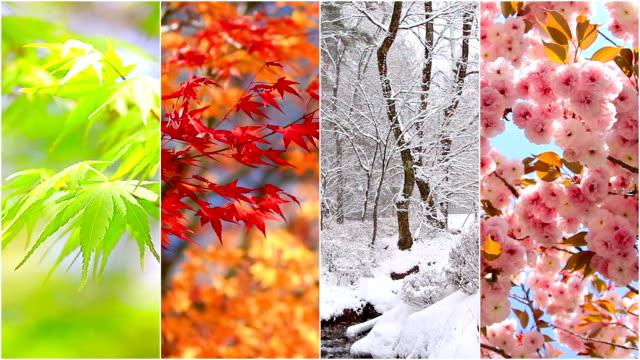 seasons nature collage.