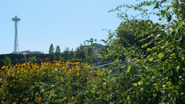 vídeos de stock e filmes b-roll de seattle wa center park wildflowers - granadilha