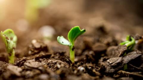 vídeos de stock e filmes b-roll de seed growing time lapse macro lens flare - biologia