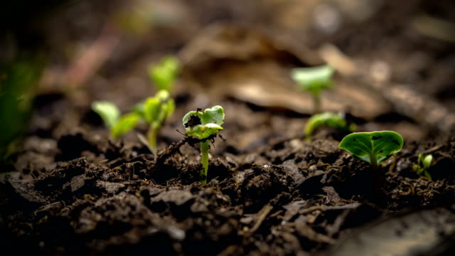 seed growing time lapse macro - plants stock videos & royalty-free footage