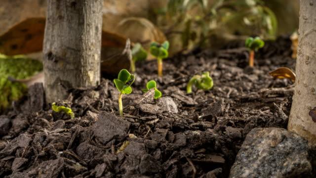 時間経過の発芽と成長 - 苗点の映像素材/bロール